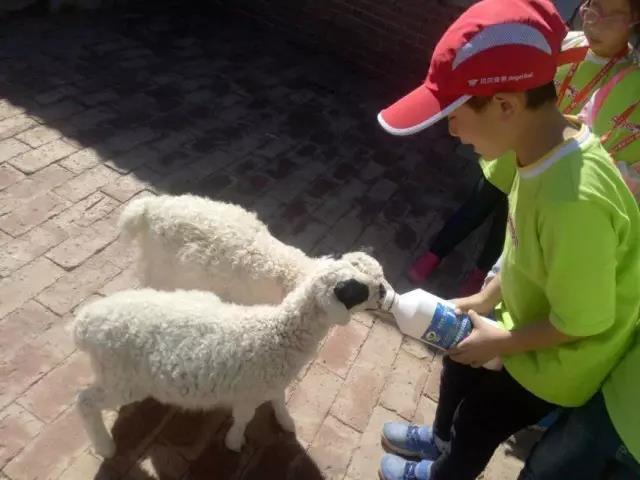 微信头像孩子和动物